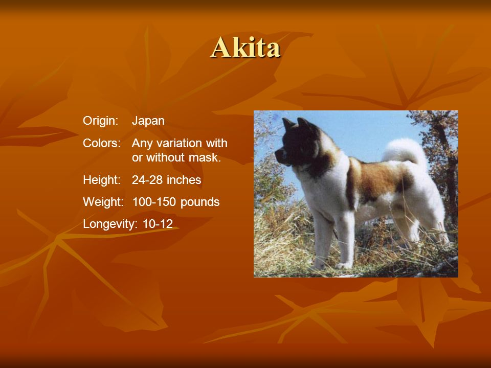 Akita Origin: Japan Colors: Any variation with or without mask.