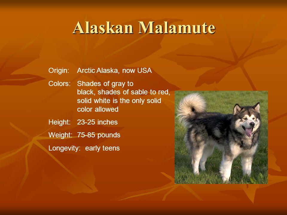 Alaskan Malamute Origin: Arctic Alaska, now USA