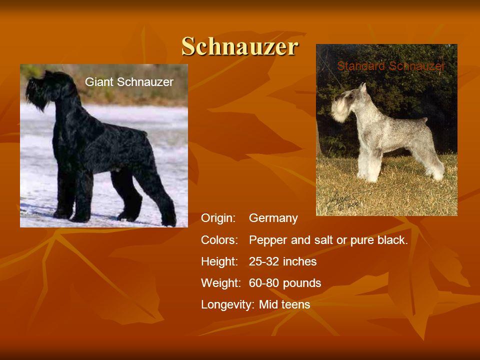 Schnauzer Standard Schnauzer Giant Schnauzer Origin: Germany