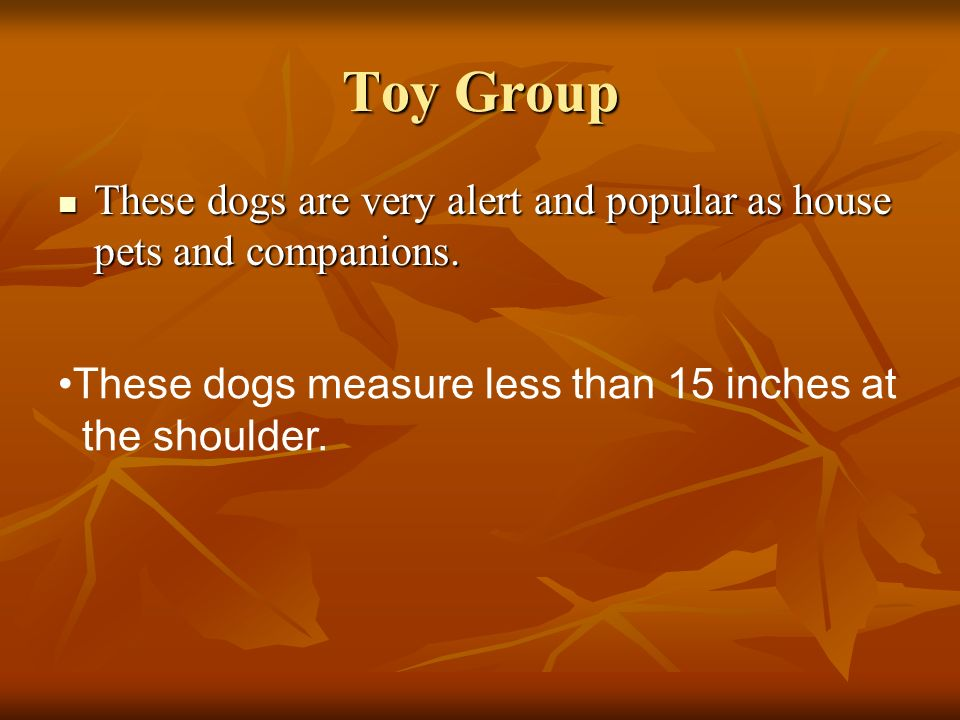 Toy Group These dogs are very alert and popular as house pets and companions. These dogs measure less than 15 inches at.