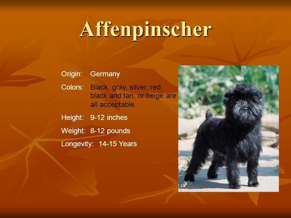 Affenpinscher Origin: Germany