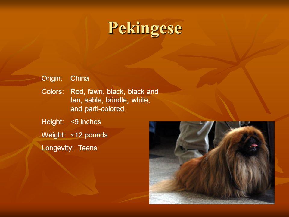 Pekingese Origin: China