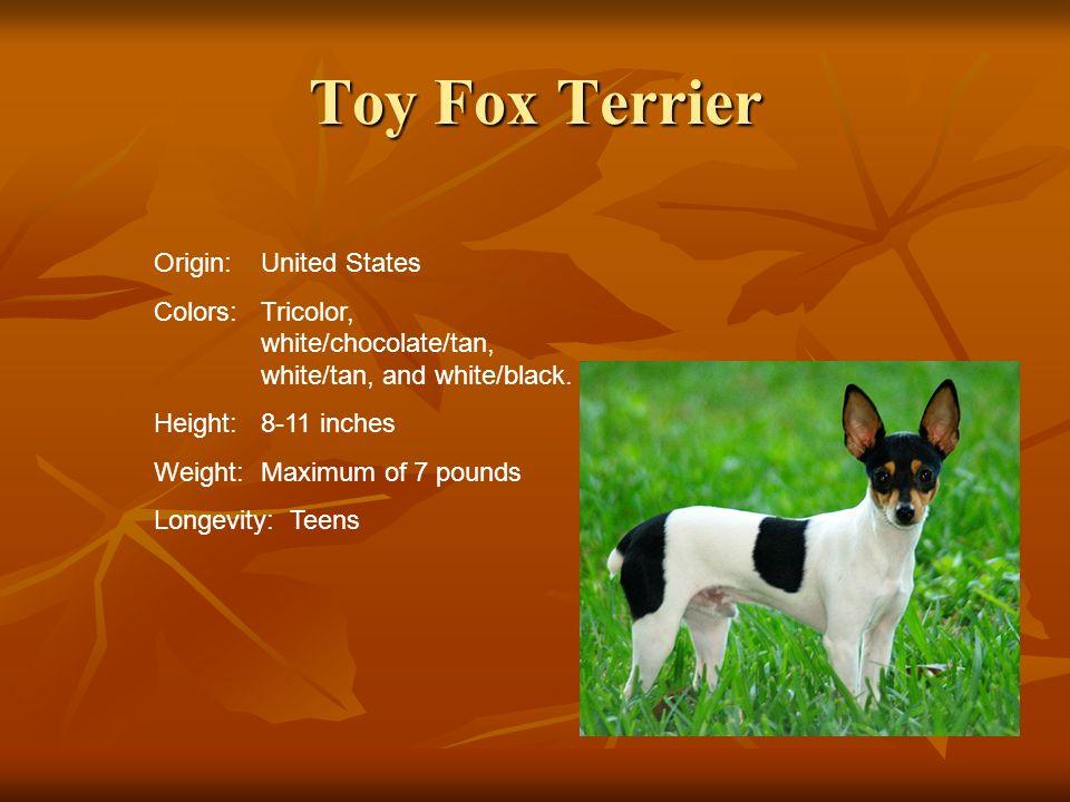 Toy Fox Terrier Origin: United States