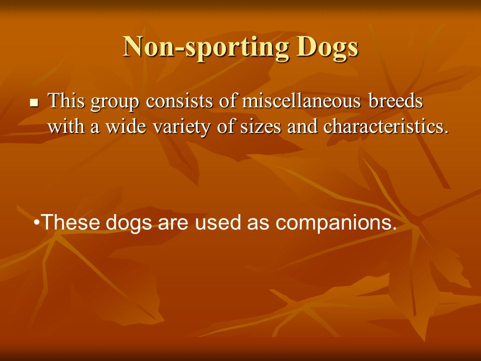 Non-sporting Dogs This group consists of miscellaneous breeds with a wide variety of sizes and characteristics.
