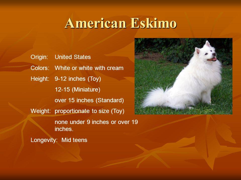 American Eskimo Origin: United States