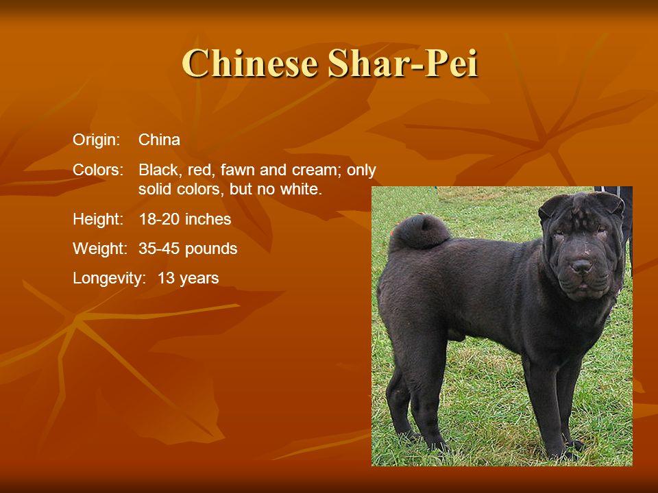 Chinese Shar-Pei Origin: China