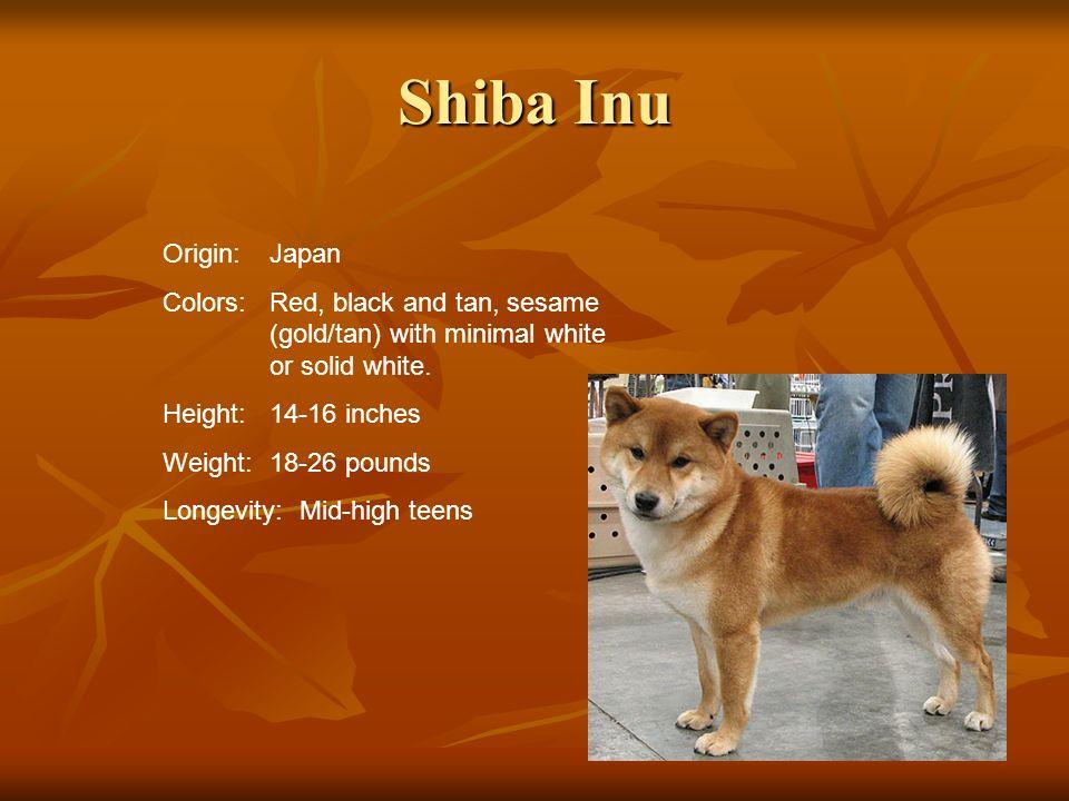 Shiba Inu Origin: Japan