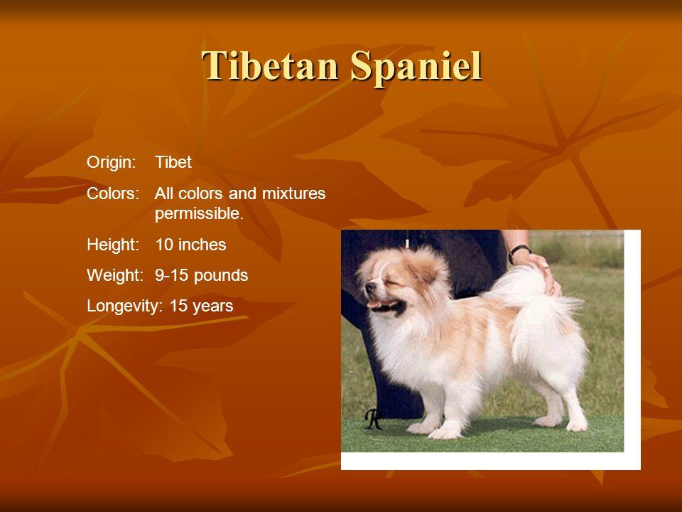Tibetan Spaniel Origin: Tibet