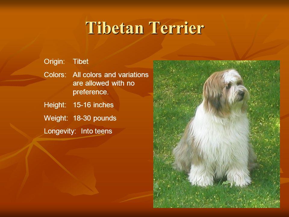 Tibetan Terrier Origin: Tibet