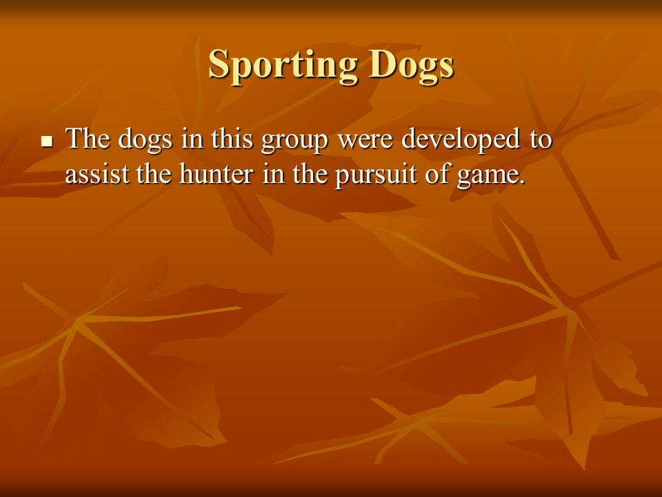 Sporting Dogs The dogs in this group were developed to assist the hunter in the pursuit of game.