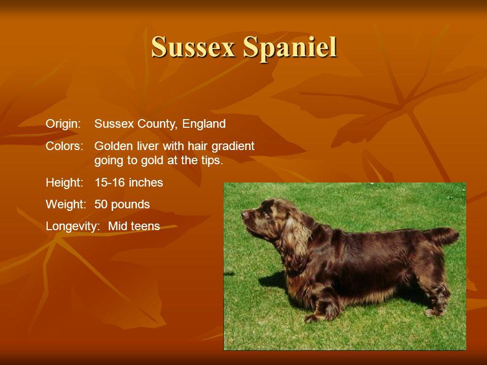 Sussex Spaniel Origin: Sussex County, England