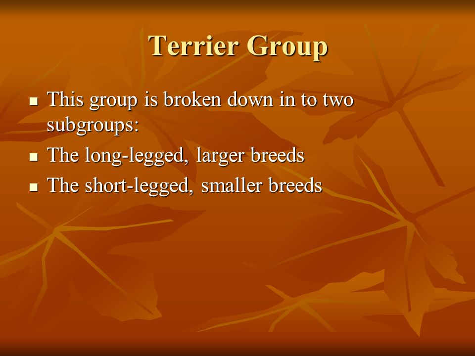 Terrier Group This group is broken down in to two subgroups:
