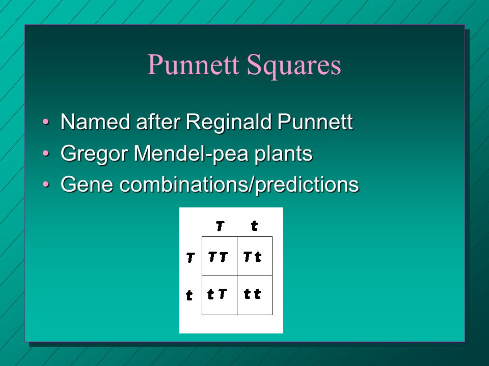 Punnett Squares Named after Reginald Punnett Gregor Mendel-pea plants