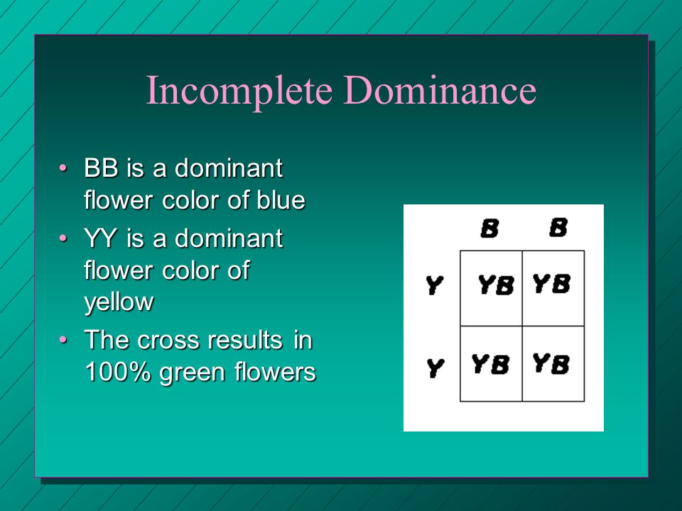 Incomplete Dominance BB is a dominant flower color of blue