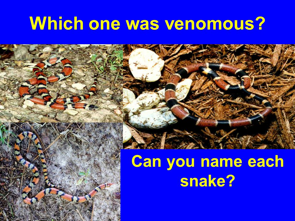 Which one was venomous Can you name each snake