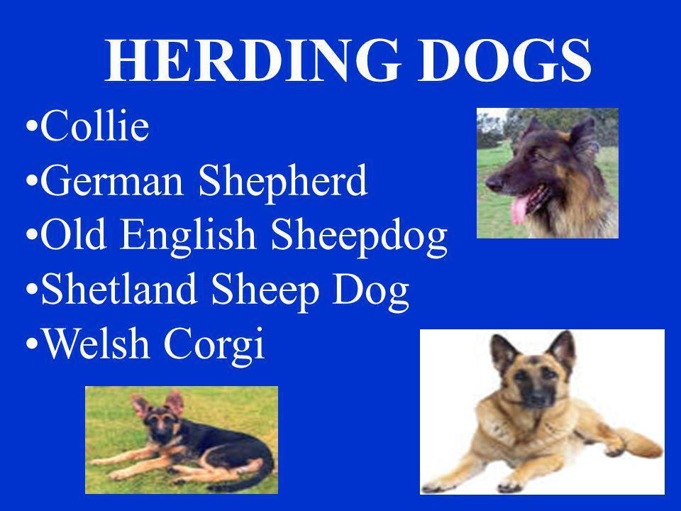 HERDING DOGS Collie German Shepherd Old English Sheepdog