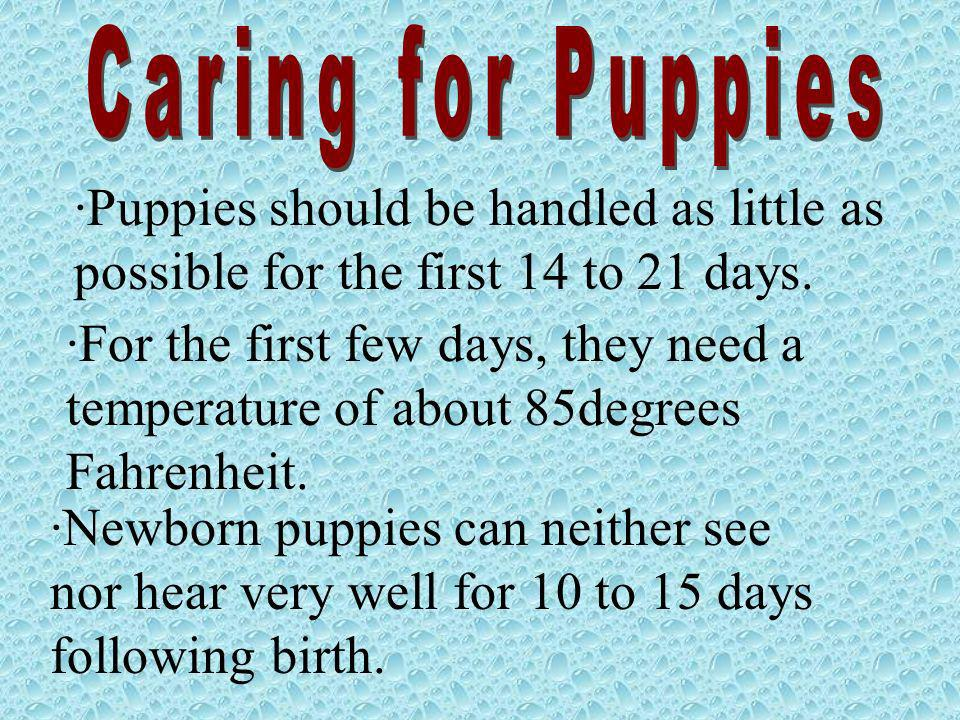 Caring for Puppies Puppies should be handled as little as possible for the first 14 to 21 days.