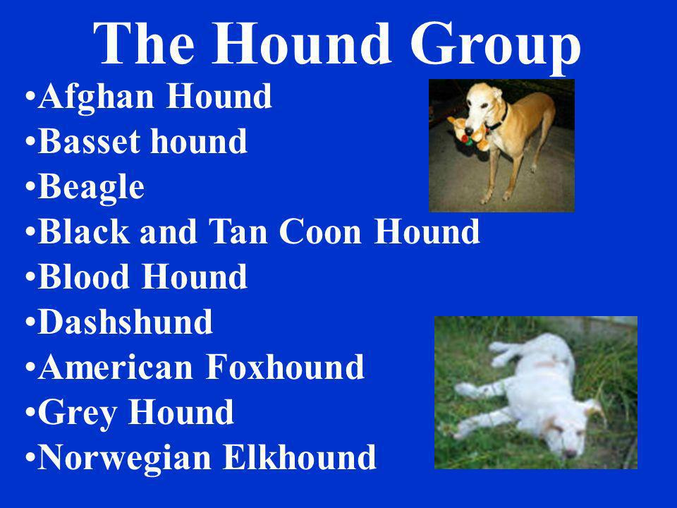 The Hound Group Afghan Hound Basset hound Beagle