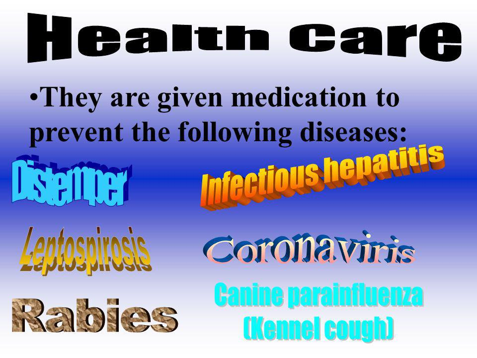 They are given medication to prevent the following diseases: