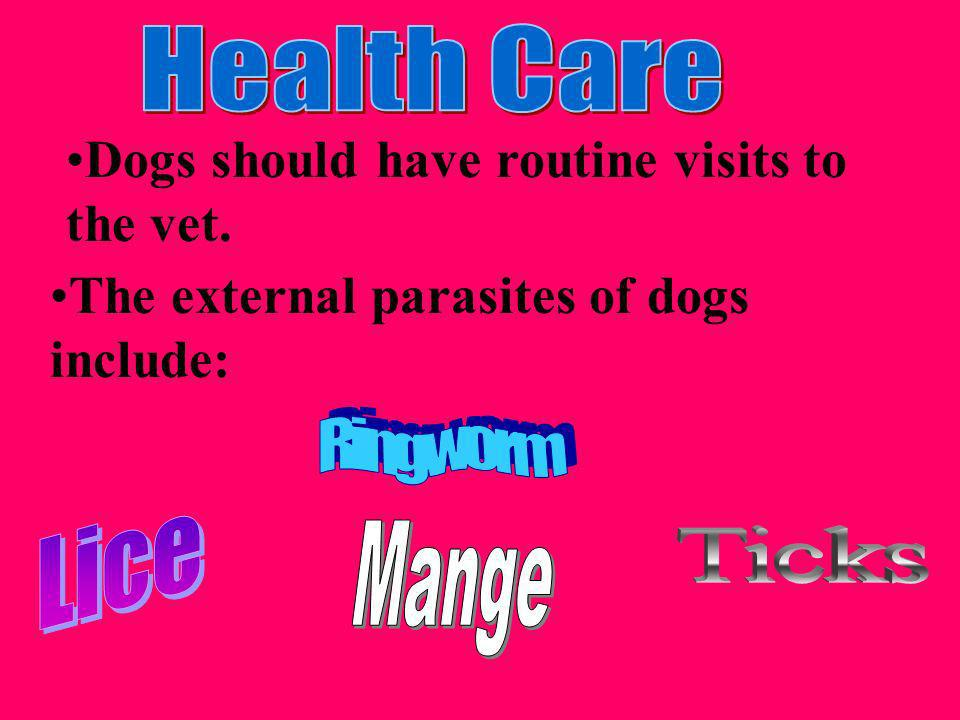 Dogs should have routine visits to the vet.