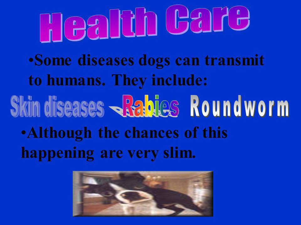 Some diseases dogs can transmit to humans. They include: