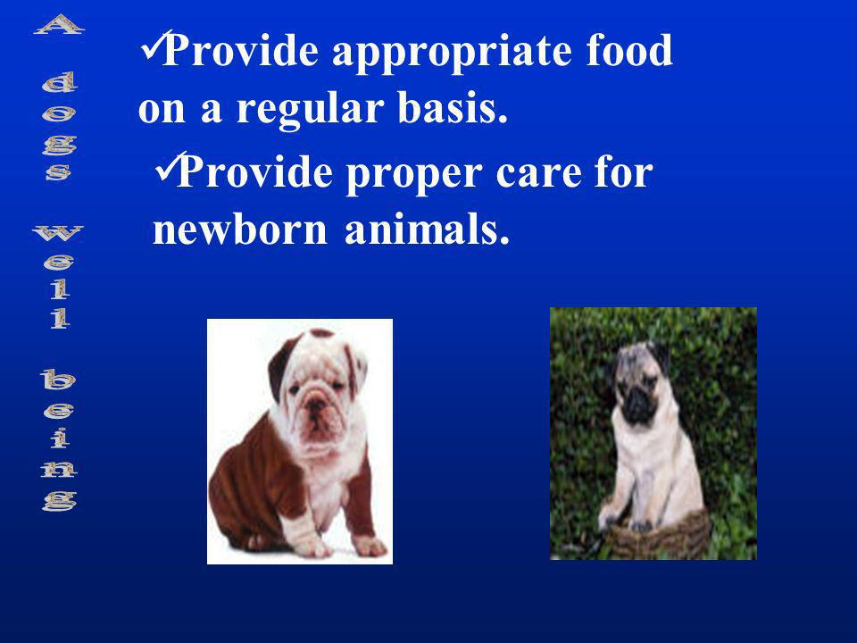 Provide appropriate food on a regular basis.