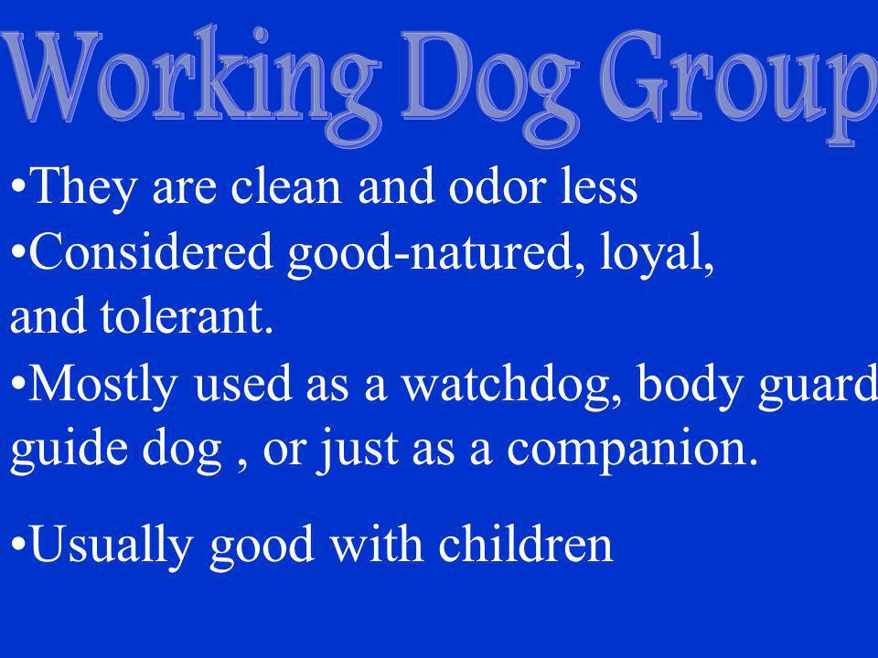 They are clean and odor less Considered good-natured, loyal,