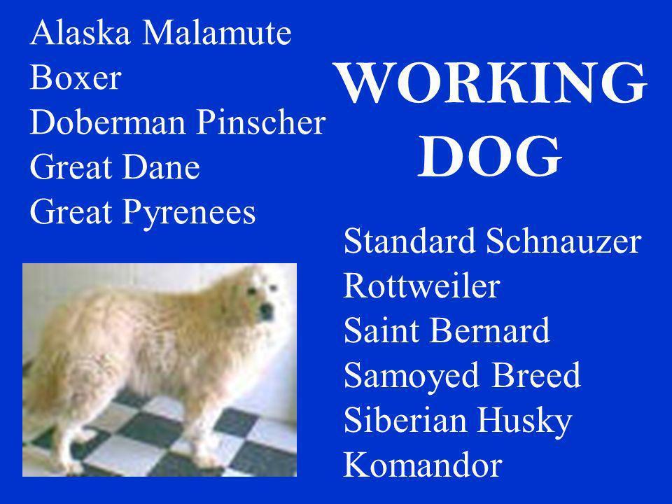 WORKING DOG Alaska Malamute Boxer Doberman Pinscher Great Dane