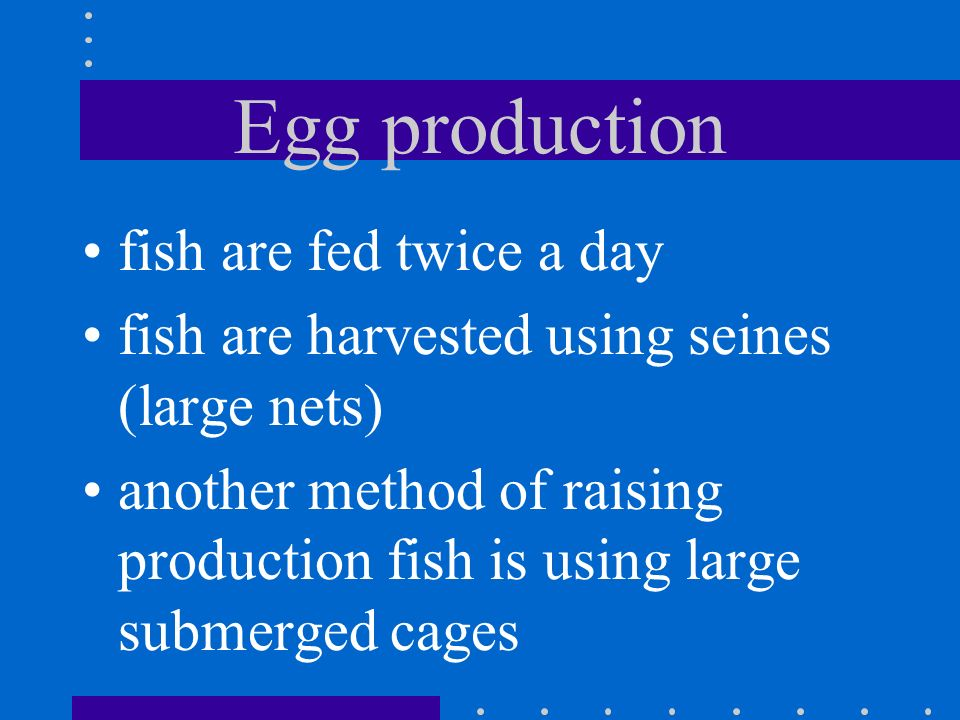 Egg production fish are fed twice a day