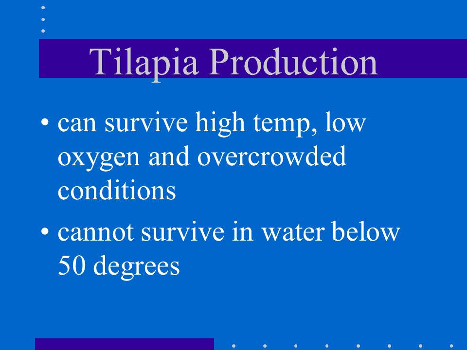 Tilapia Production can survive high temp, low oxygen and overcrowded conditions.