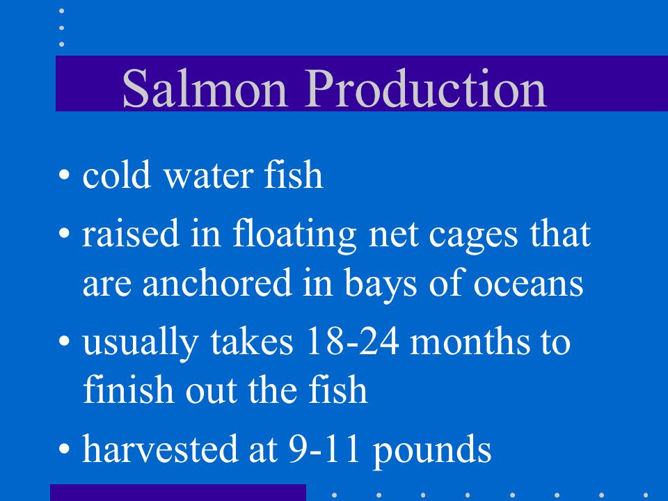 Salmon Production cold water fish