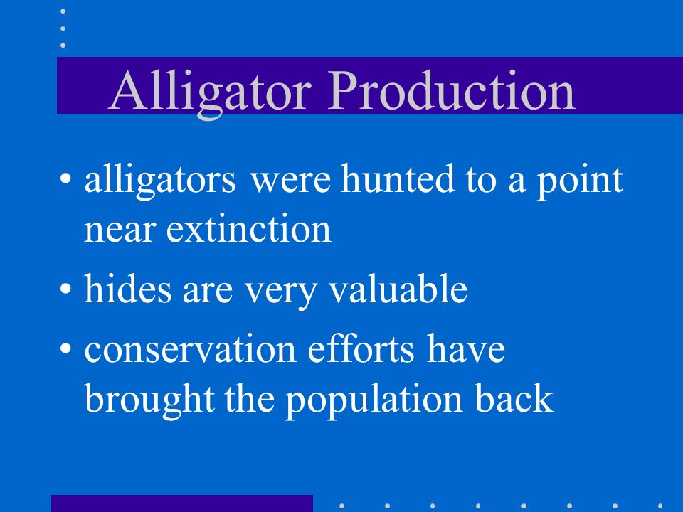 Alligator Production alligators were hunted to a point near extinction
