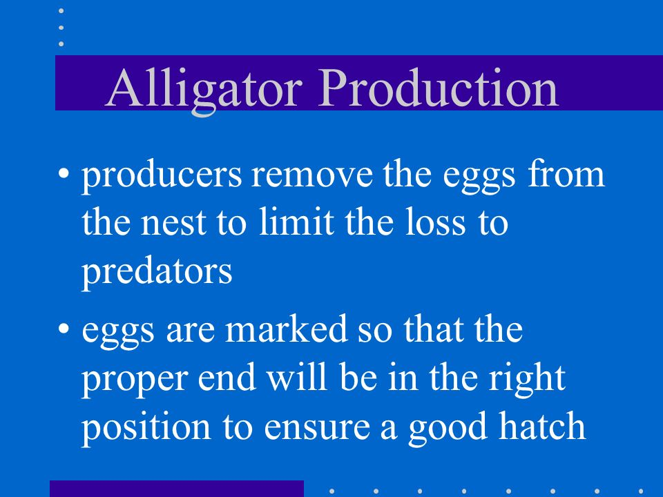 Alligator Production producers remove the eggs from the nest to limit the loss to predators.