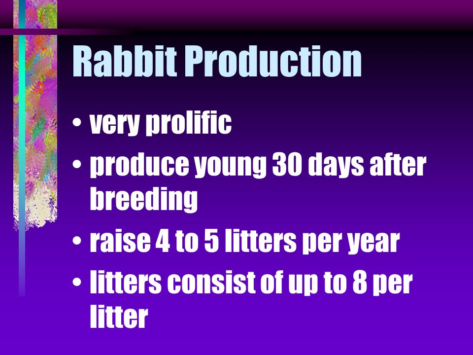 Rabbit Production very prolific produce young 30 days after breeding