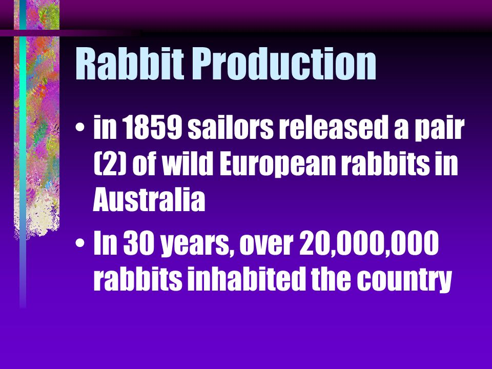 Rabbit Production in 1859 sailors released a pair (2) of wild European rabbits in Australia.