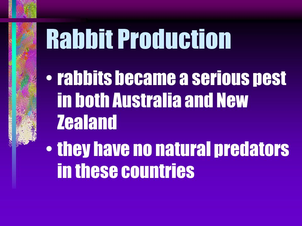 Rabbit Production rabbits became a serious pest in both Australia and New Zealand.