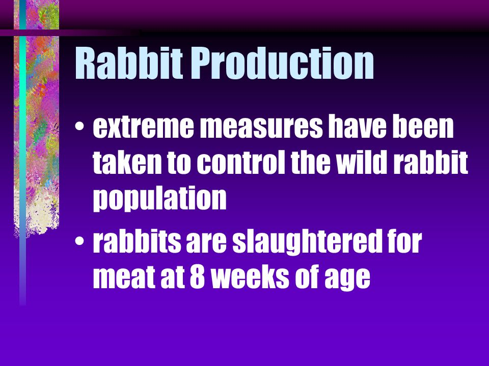 Rabbit Production extreme measures have been taken to control the wild rabbit population.