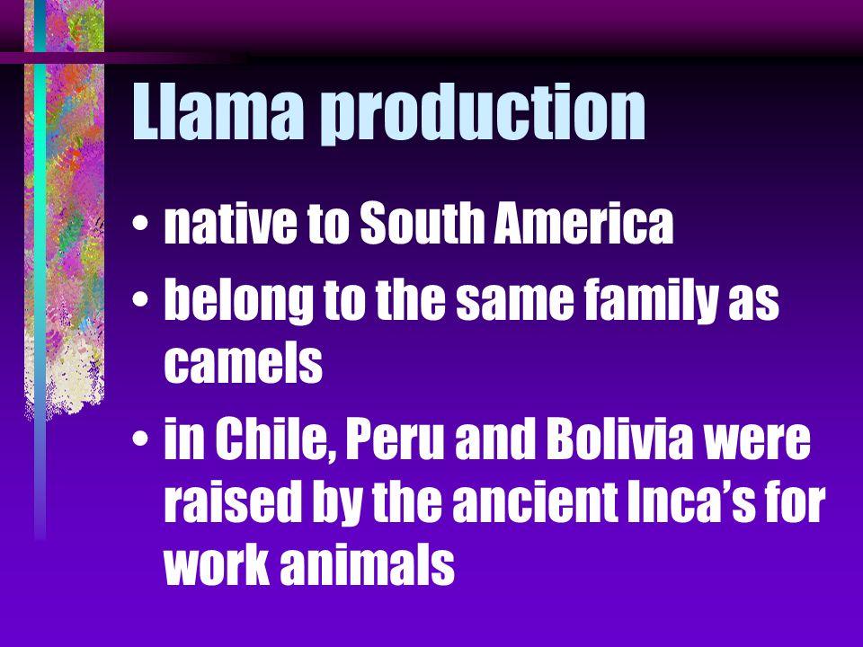 Llama production native to South America