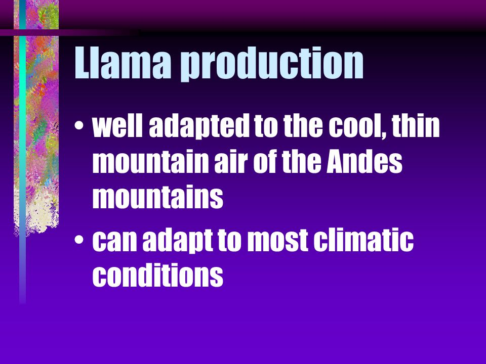 Llama production well adapted to the cool, thin mountain air of the Andes mountains.