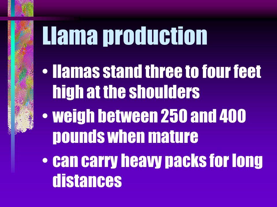 Llama production llamas stand three to four feet high at the shoulders