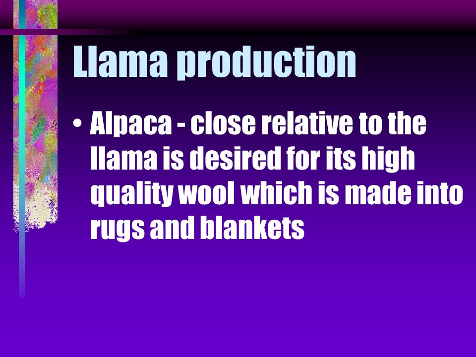 Llama production Alpaca - close relative to the llama is desired for its high quality wool which is made into rugs and blankets.