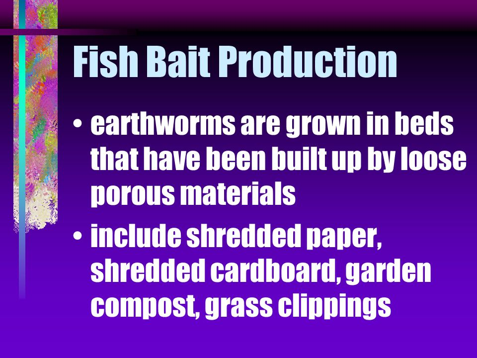 Fish Bait Production earthworms are grown in beds that have been built up by loose porous materials.