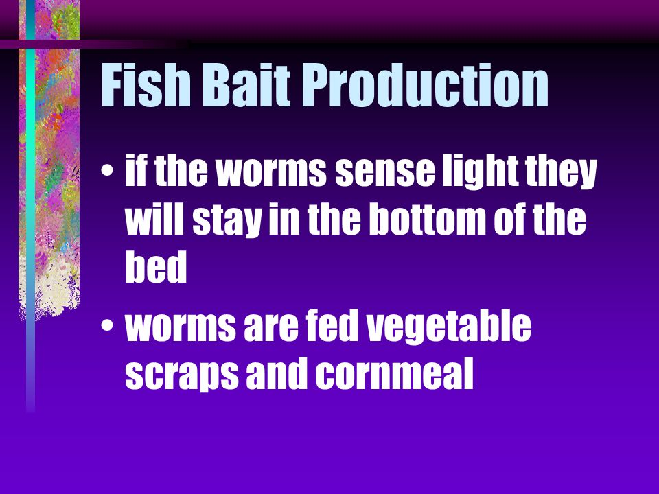Fish Bait Production if the worms sense light they will stay in the bottom of the bed.