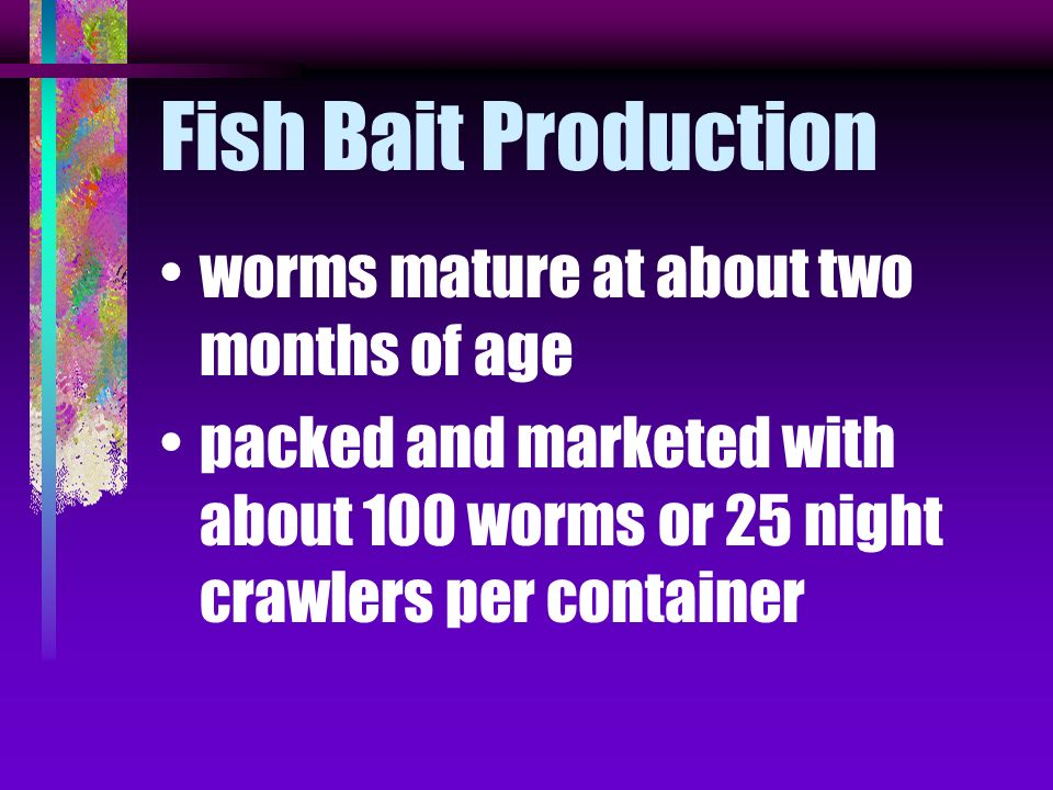 Fish Bait Production worms mature at about two months of age