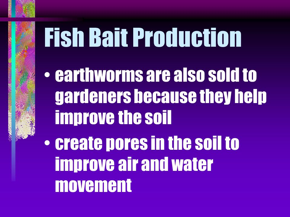 Fish Bait Production earthworms are also sold to gardeners because they help improve the soil.