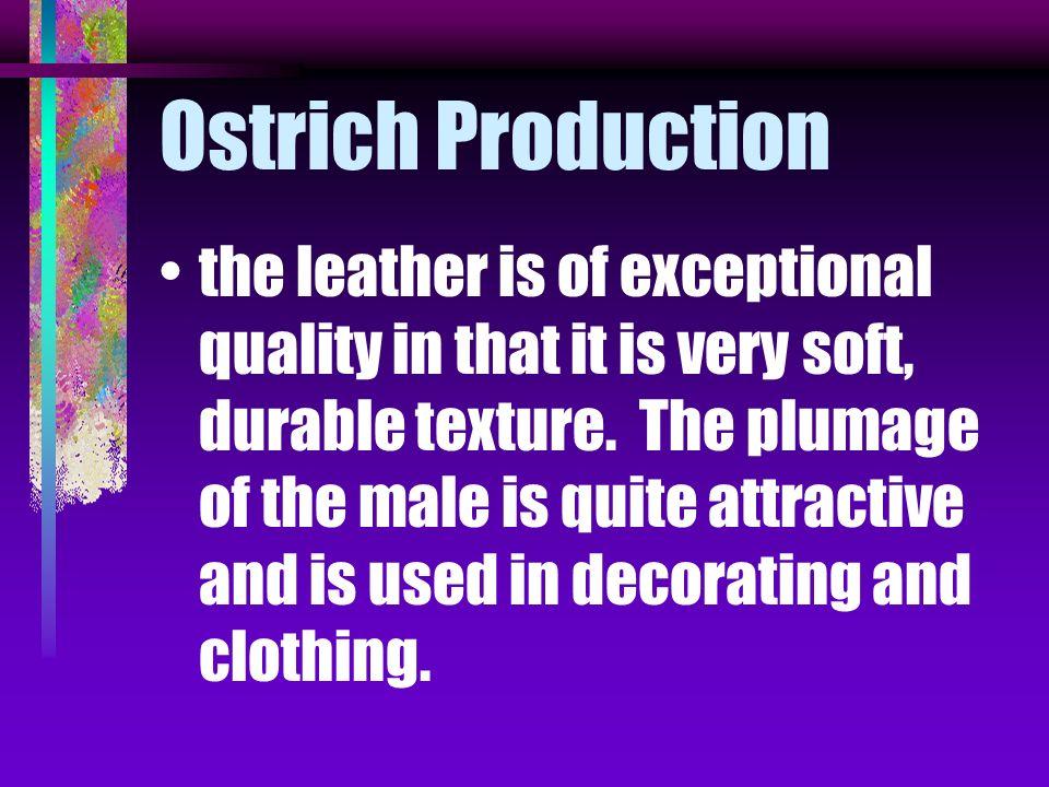 Ostrich Production
