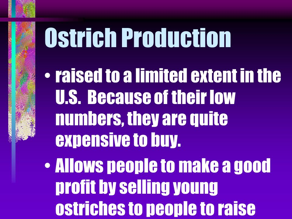 Ostrich Production raised to a limited extent in the U.S. Because of their low numbers, they are quite expensive to buy.