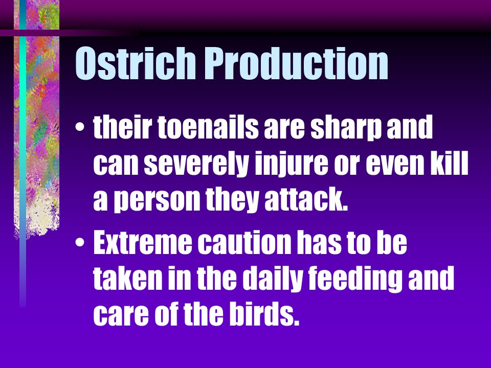 Ostrich Production their toenails are sharp and can severely injure or even kill a person they attack.