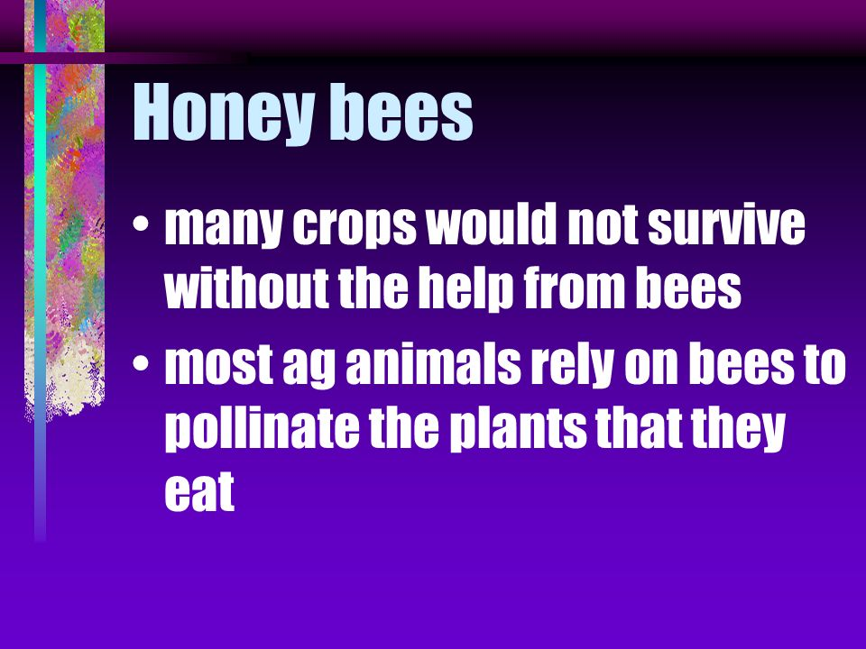 Honey bees many crops would not survive without the help from bees