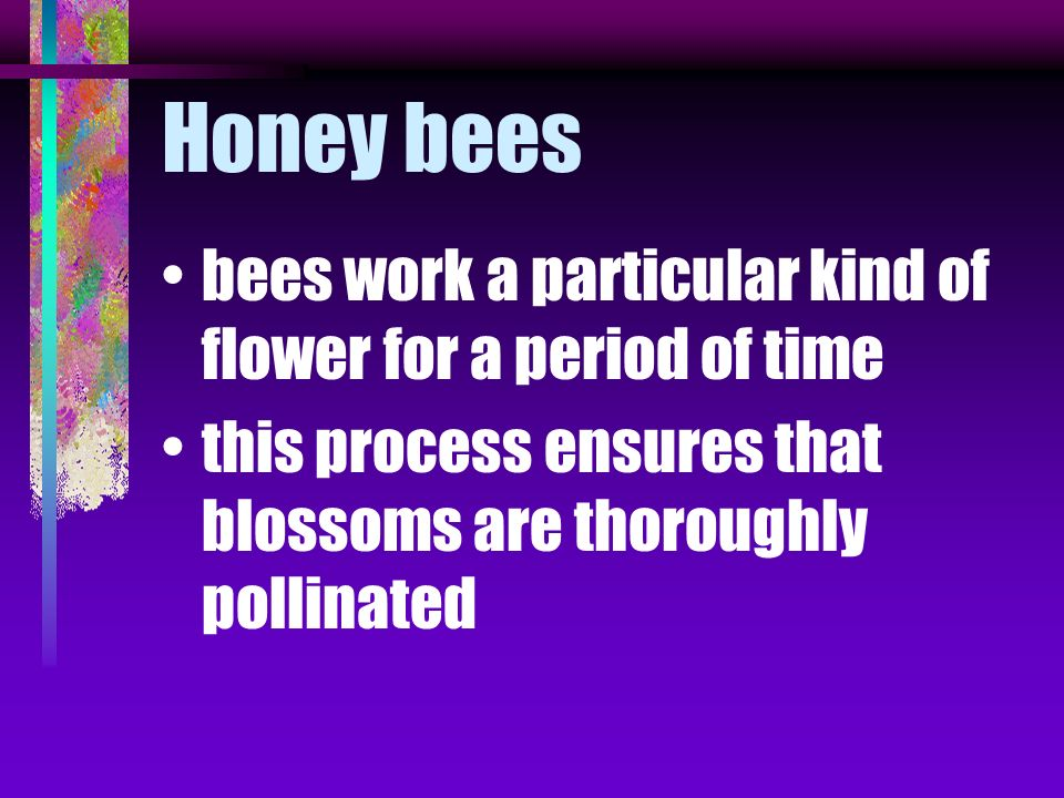 Honey bees bees work a particular kind of flower for a period of time